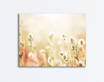 "Cream Nature Canvas Wrap, light beige photography pale yellow canvas gallery wrapped botanical neutral wall green art print, ""Sunkissed"""