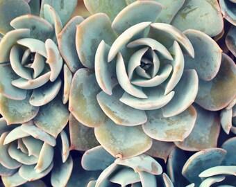Succulent Photograph, Succulent Photography, Fine Art Photography, Nature Photography, Garden Art, Succulent Wall Decor, Succulent Photo