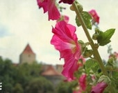 Prague in bloom, dreamy cityscape, pink, pastel colours, whimsical landscape, 12x8, giclee print