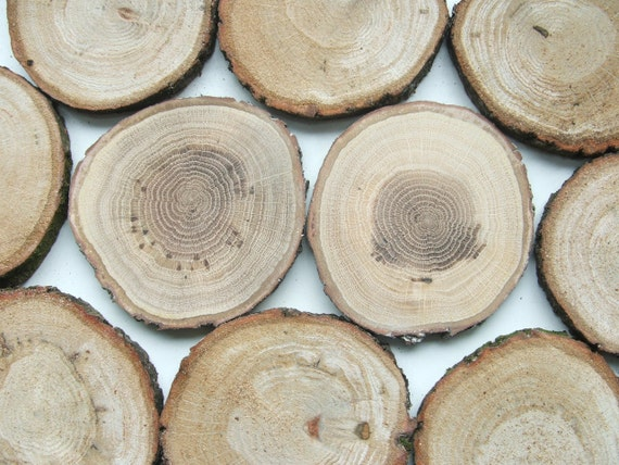 Rustic oak wood slices for crafts and projects cm