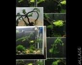 Aqua Bonsai Premium 6 moss aquarium tree
