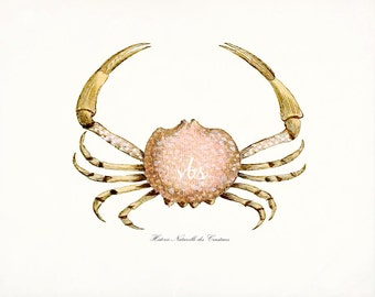 Antique French Crab Natural History Wall Decor Art Print - Ocean Coral