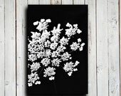 Queen Anne's Lace - Queen Anne's Lace photography - Black and White decor - Black and White photography - Black and White art