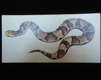 Vintage Reptile Flashcard Color Decor Paper Ephemera Northern Copperhead Snake 1960's (item 12)