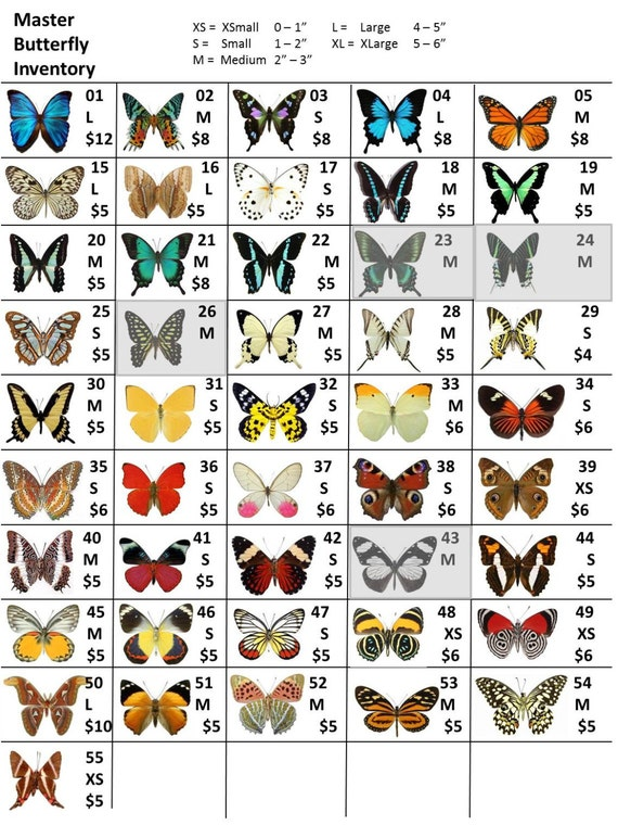 Custom Butterfly Wing Listing
