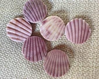 Pecten Nobeis Shell Beads