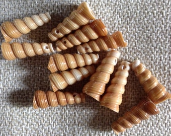 Brown Sprial Shell Beads