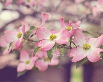 Flower Photography- Pink Dogwood Flowers, Flowering Tree Photo, Spring Floral Art, Nature Photography, Pink Dogwood Print, Dogwood Photo