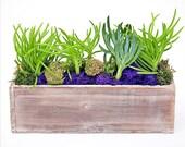 WOODLAND SUCCULENT planter -trendy decor, succulents, indoor plants, succulent planter,office plant,terrarium,birthday gift, cool gift ideas