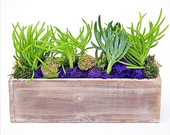 Popular items for office plants on etsy - Cool office plants ...