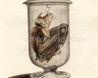 BAT in a JAR print glorious creepy nature print
