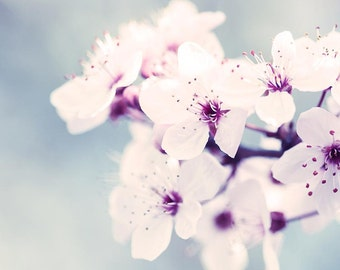 blossom photography spring botanical photography sakura 8x10 8x12 fine art photography nature pink pastel gray bedroom decor radiant orchid