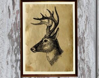 Deer art Antlers illustration animal print Old paper home decor AK64