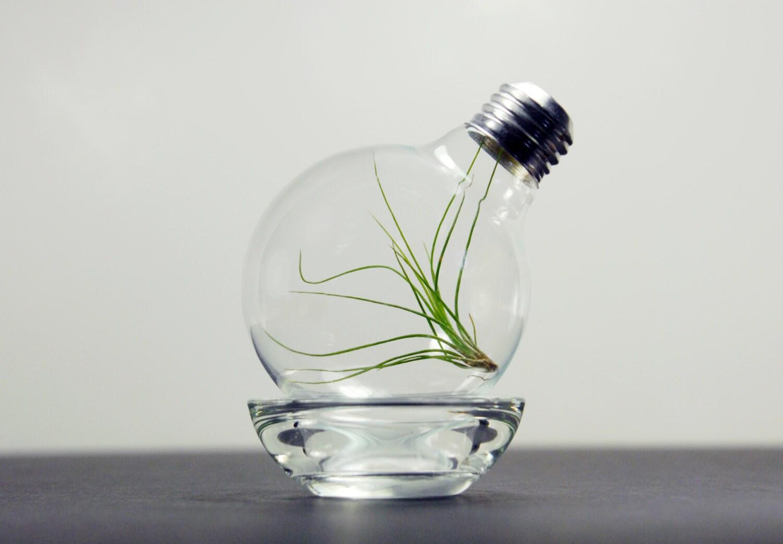 air plant light bulb terrarium airplant lightbulb glass. Black Bedroom Furniture Sets. Home Design Ideas