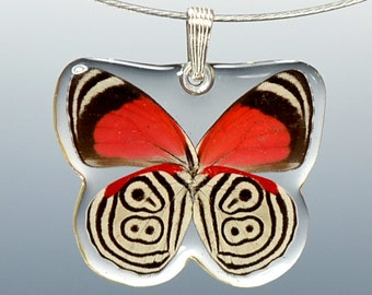 Real Whole Butterfly Pendant Necklace, Cramer's 88 Butterfly