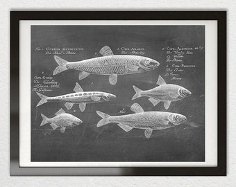 Antique FISH Art Print Poster Rustic Chalkboard Chalk Scientific Distressed Black White Sea Life Marine Nautical Marine Beach Illustration