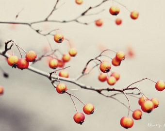 red, berries, nature, tree, winter,  fine art photography