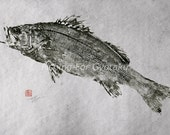 Japanese Sea Bass (hira-suzuki) reproduction GYOTAKU - traditional Japanese fish art