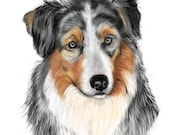 Australian Shepherd Blank Note Card