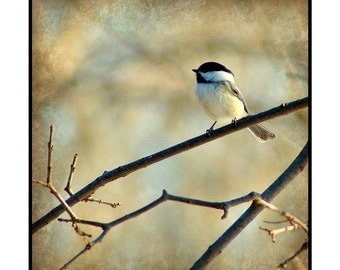 Winter Chicadee in Paint