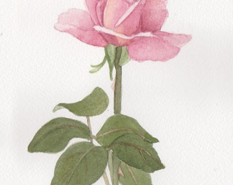 Pink Rose 1 5 x 7  Original Watercolor