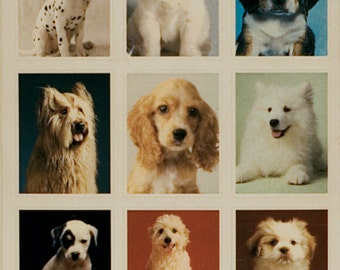 Dogs,dogs and more dogs vintage stickers, American Greetings