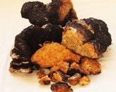 Two Pounds Chaga Mushroom Powder