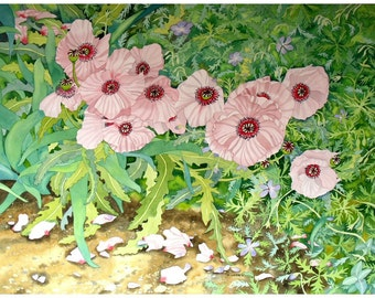 Pale Pink Poppies Original Watercolour Painting with Green and Lilac