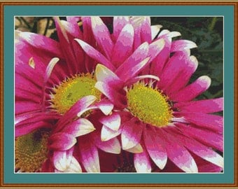 Pink Daisy Flowers Cross Stitch Pattern
