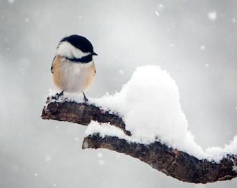 Bird Photography, Bird Art, birdwatching, Snowman, Gifts for Her, Nursery Art bird, Chickadee Photograph