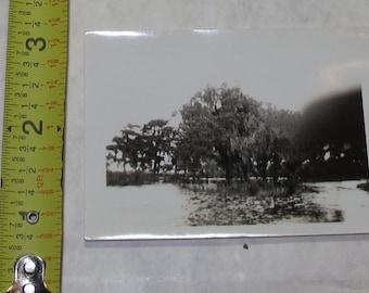 vintage b/w/ black and white photo photograph louisiana swamp