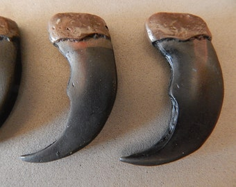 Black Bear Claws 2 Inch Wholesale Lot 5 Simulated