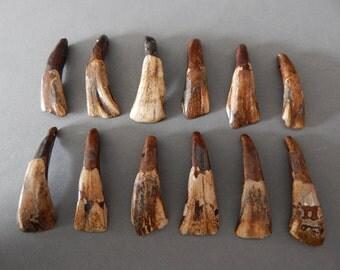 Buffalo Teeth Beautifully Antiqued Lot Wholesale