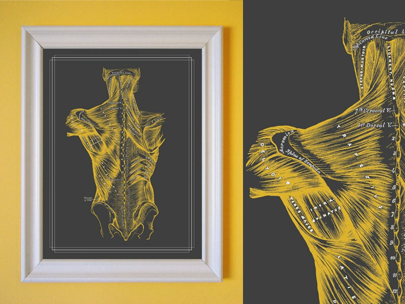 Wall Decor For Massage Room : Massage therapist muscles of the back therapy room by
