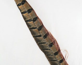 "Ringneck Pheasant Feathers, 20-25"" per 3"
