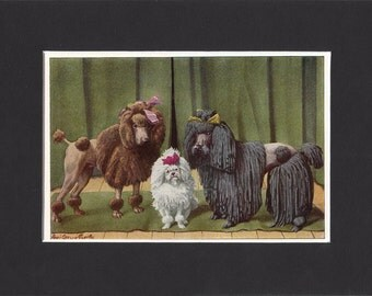 "Poodles Print 1919 Vintage Dog Print by Louis Agassiz Fuertes Small Picture Mounted + Mat 8"" x 6"" Print"