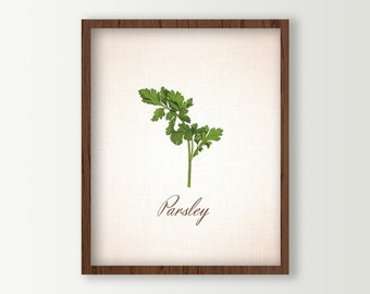 Herbs Kitchen Decor - Food Art - Kitchen Art - Parsley Leaves Culinary Prints - Green Kitchen Decor - Cooking Herbs Wall Art - Kitchen Sign