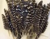 Small White Stripped Turkey Feather