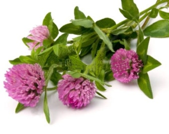 Red Clover Capsules (Organic) *BEST SELLER*