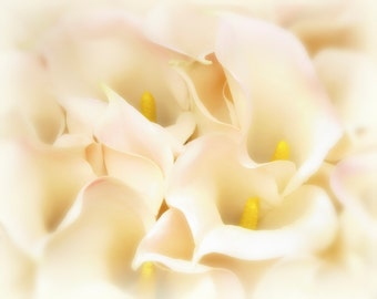 Calla Lilies, Dreamy Photography, White Flower Photography, Calla Lily, Calla Lily Art, Romantic Art, Cottage Chic, Flower Art, Country Chic