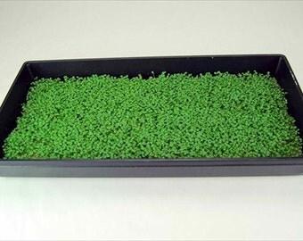 Endive: Green Curled Ruffec Microgreen Seeds 4 Oz. Package - Growing Micro Greens