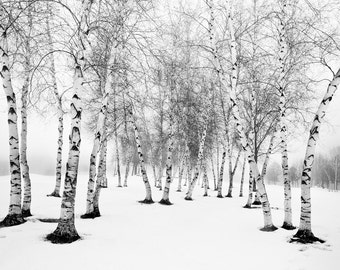 Birch Trees in Snow in Black and White Nature Photo. Gifts for nature lovers. Winter photos of birch trees in snow. Birch Trees in snow