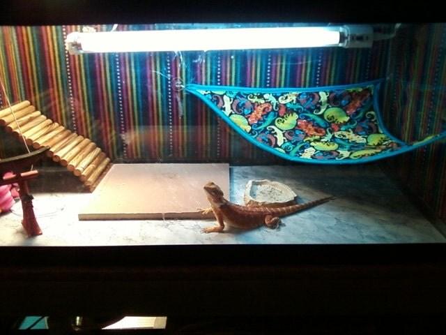Reptile Hammocks Reg Size For Beardies Up To 18
