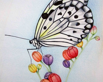 Pencil Art Work Butterfly with Spring Buds Original Drawing-Print