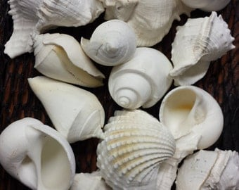 White Shells Mix