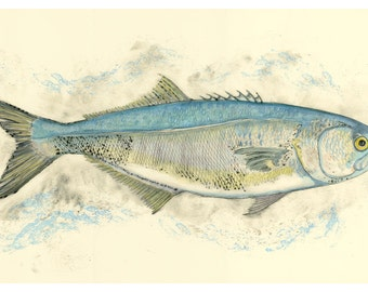Bluefish (Color) print