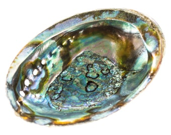 Abalone Shell Smudge Bowl