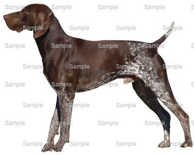 german shorthaired pointer wedding cake topper german shorthaired pointer birthday edible cake and 14674