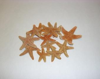 """Sugar StarFish Sea Shell Wedding Real Craft 1 - 2"""" (12 pcs)"""