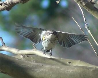 Digital Download, Nature Photography, Bird, Bird Picture, Fall, Bird Photo, Bird art, Bird Flying, Art, Stock photography, Stock photo